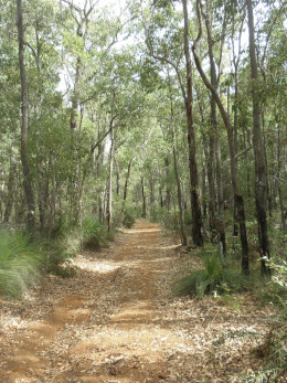 I have set out on a 12,4 km walk from Yarragil River to River Road, which is part of the long distance trai,