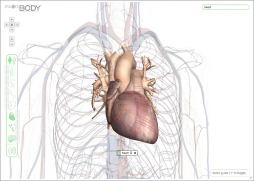 A Study of the Heart in Detail