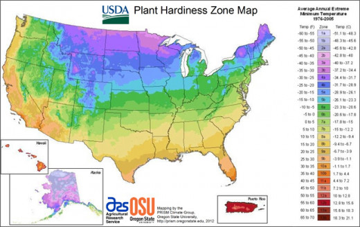 Be sure to check your zone when deciding on plants