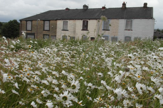 Terraced houses and wild flower meadow, Burnley