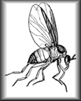 Female black flies have biting mouthparts, males not so much.