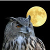 rvaughn32 profile image