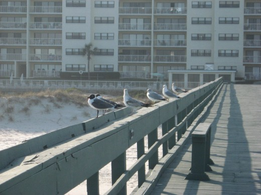 Amelia by the Sea - view of the condos from the pier.