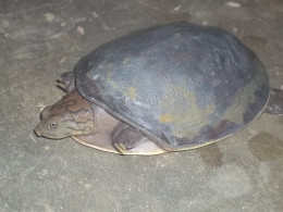 Tuktuk, the tortoise living with us for last one decade