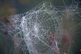 What a tangled web we weave