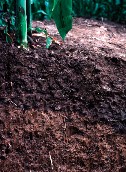Testing water infiltration rates in your soil profile is easy to do and it can make the difference between good versus ineffective watering of your garden.