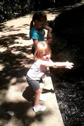 Feeding fish at the trout hatchery