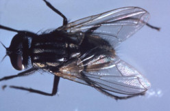 Flies are the most common indoor pests.