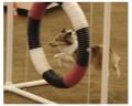 Dog Column: Overcoming Injury in Agility