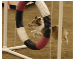 Dog Column: Overcoming Injury in Agility