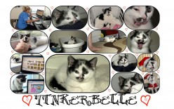 Tinkerbelle.