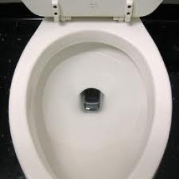 If you are having trouble with your toilet draining, one of the possible causes could be roots in the system.