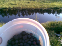 This is when I was picking some blueberries outside our house the other day.