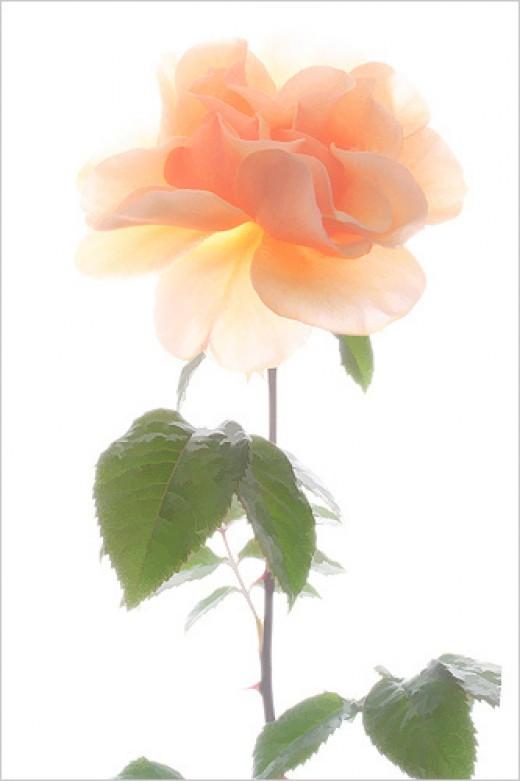 Macro / Flower from Bahman Farzad Source: flickr.com