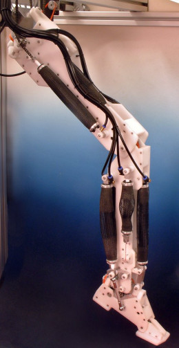 A robotic leg powered by air muscles