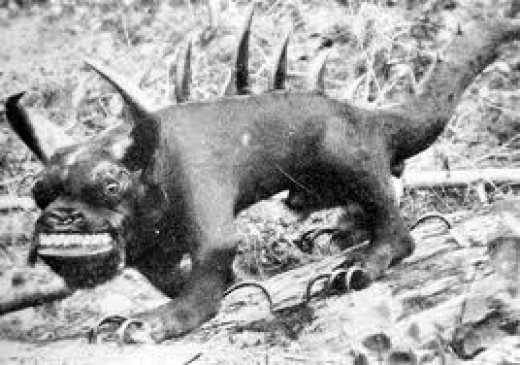 Eugene Shepard's legendary hodag monster
