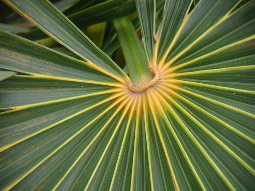 """Plant detail,"" taken in the Florida Keys by Louise Wolff, courtesy photographer and Wikimedia Commons."