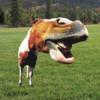 Funny Twitter Accounts-Weird Horse