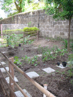Growing your own garden helps you save money on groceries.