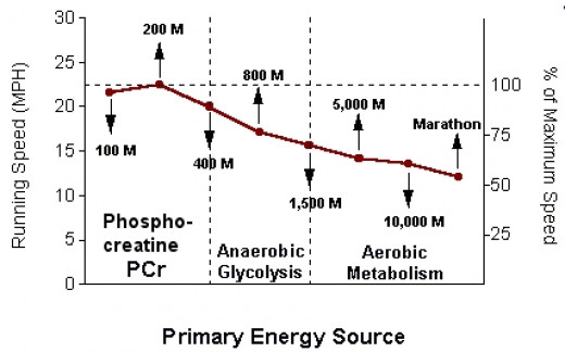 Variations in Primary Energy Source at Different Running Distances