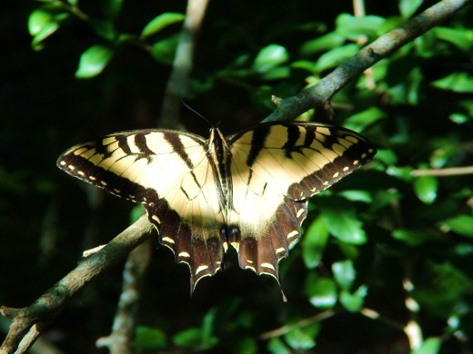 The type of egg and caterpillar are different depending on the type of butterfly it will become.