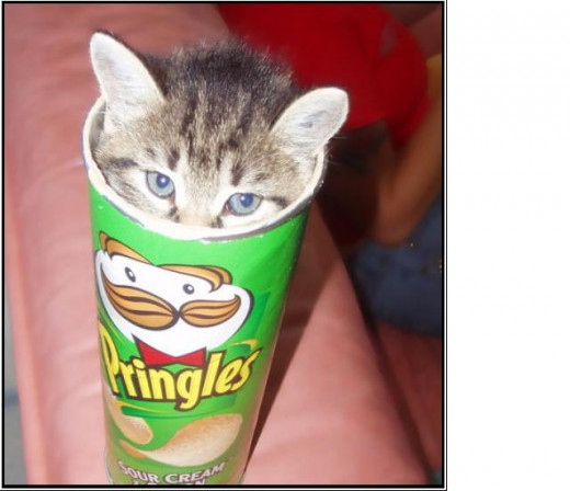 If a kitty can fit in a Pringles can, then so can cookies!