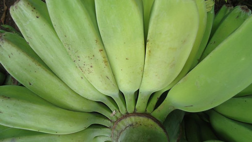 Saba banana also bessed served hot, this fruit is healthy and tasty!