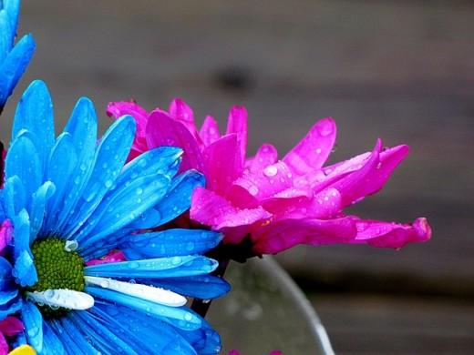 Did rain give daisies life? No.