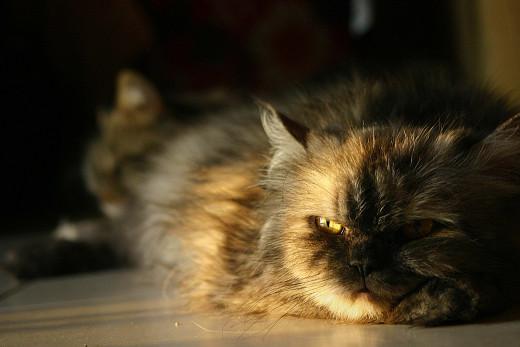 My Cat Miming