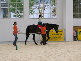 Horses help children with disabilities