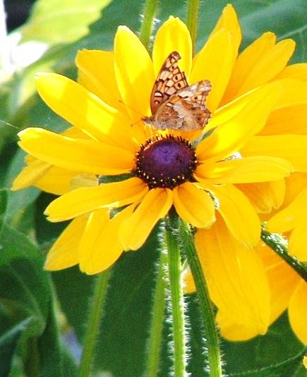 Butterfly Landing on Flower
