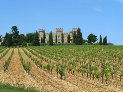A Vineyard in Chateauneuf du Pape