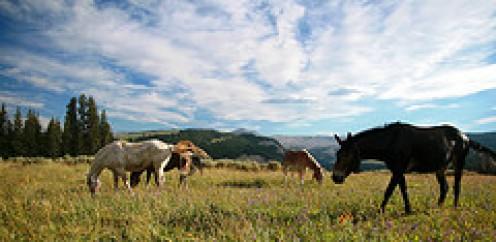 Wild horses still run free.