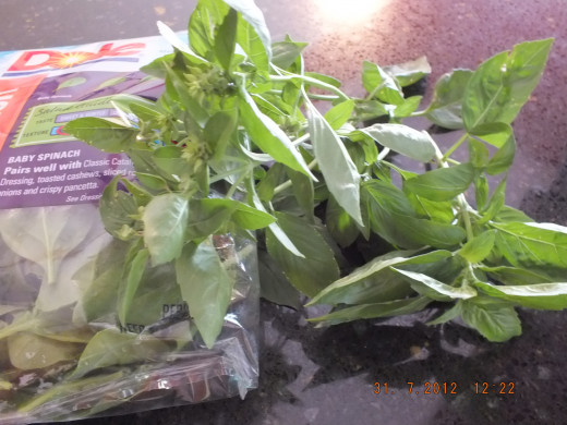Spinach and Basil on deck!