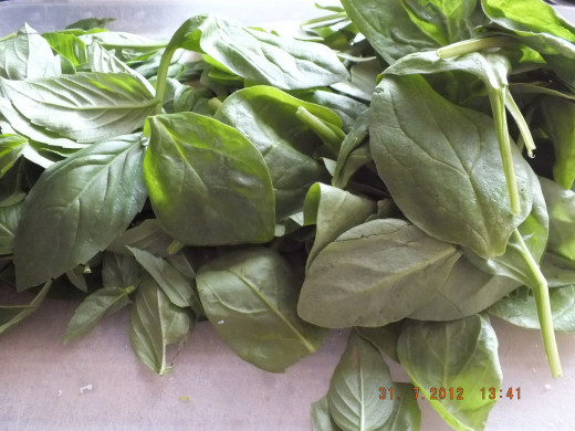 I love the smell of fresh basil
