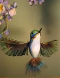 A Hummingbird Haiku
