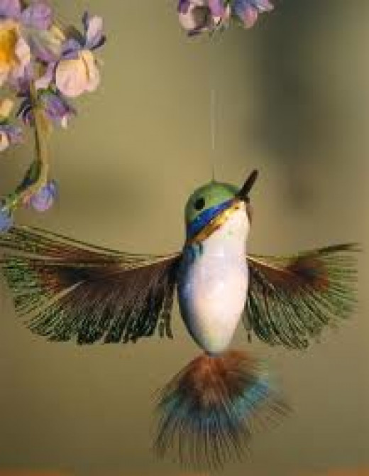 The Delicate Hummingbird
