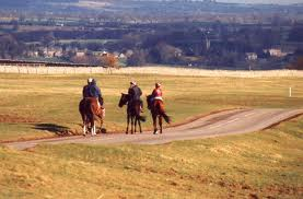 Racehorses returning to Middleham from the Low Moor gallops close to the Coverdale road, on the way to the Forbidden Corner (be sure to visit!)