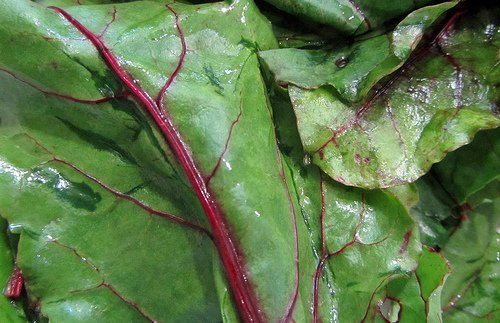 Don't forget to harvest the beet greens. They are edible and delicious!