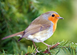 Ideas to Create a Backyard Bird Sanctuary: Attracting Wild Birds to the Garden