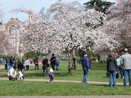 Busy crowd at the University of Washington on a spring day.