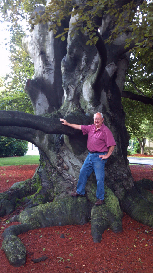The author standing against the trunk, which is some 30 feet in circumference.