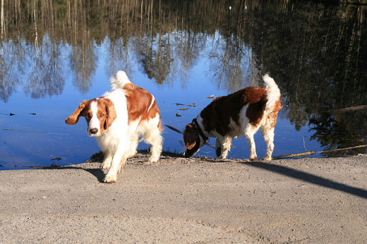 Dogs with lighter fur and lighter skin are more prone to getting sunburned.