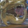 R Trenton Bostic profile image