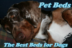 Pet Beds: The Best Beds for Dogs on Amazon