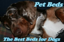 Best Pet Beds for Dogs