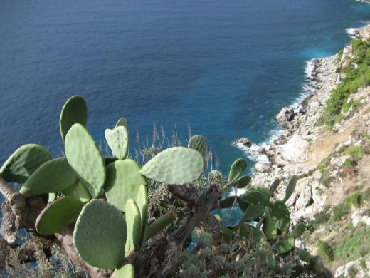 On the Island of Capri