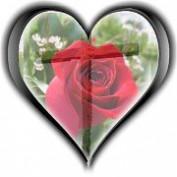 Patti Lathrop profile image