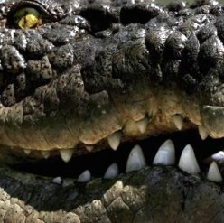 Beware of New Killer Drug Krokodil