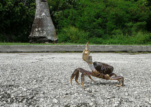 The road less-traveled.. unless you're a one-armed angry crab.